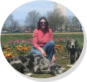 Artisan Jane Hannon with Great Danes Vegas and Marble